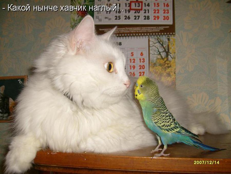 Картинки котов прикольные 1
